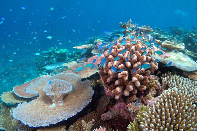 Corals in Hanauma BAy