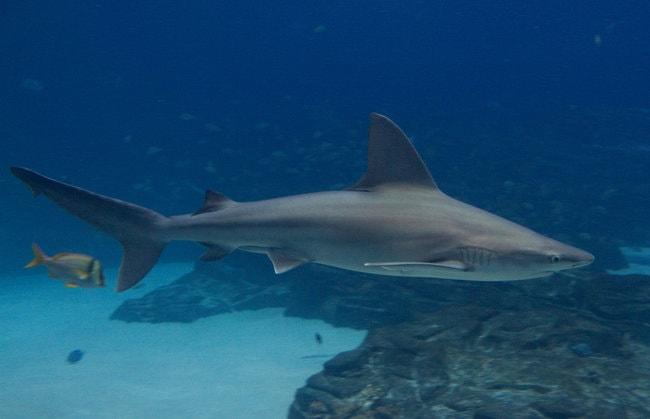 The Sandbar Sharks in Oahu