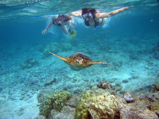Snorkeling with Turtle Canyon in Oahu
