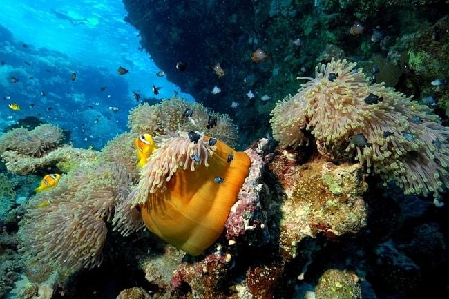 Bora Bora diving charter vacation