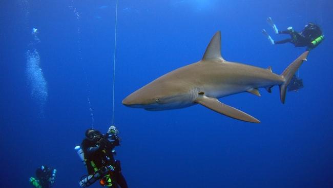 Galapagos diving charter vacation