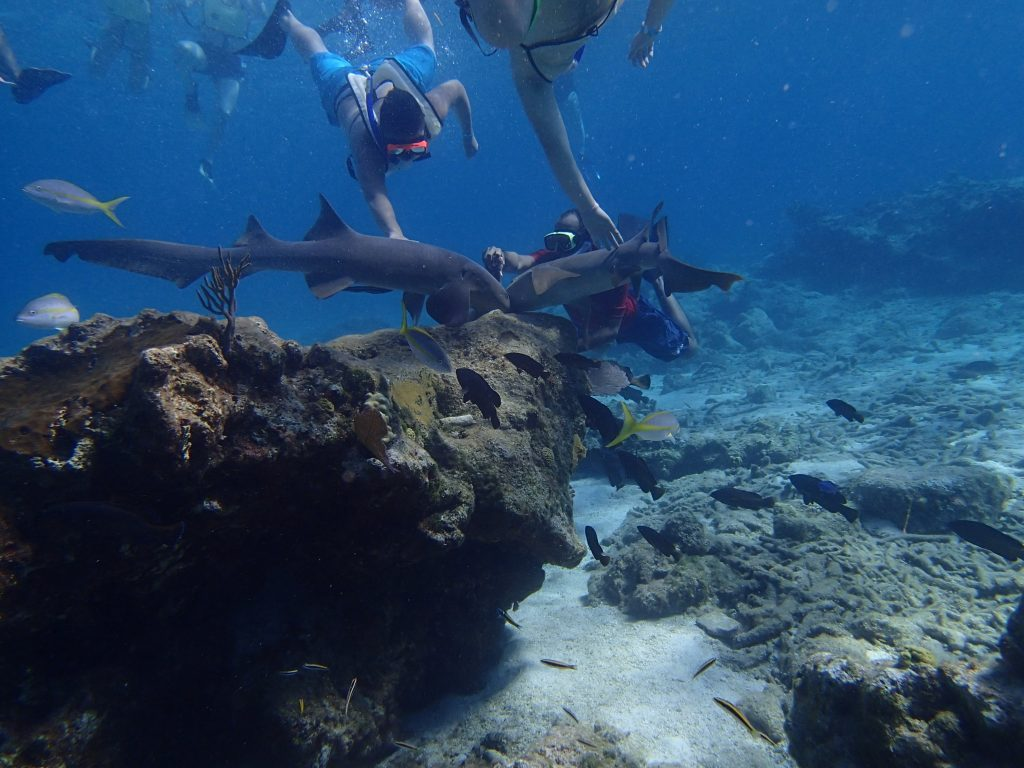 TURK AND Caicos diving charter vacation